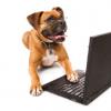 אילוף כלבים - עקרונות מאלפים
