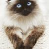סכנת השמנה אצל חתולים – כי לכל פינוק יש גבול