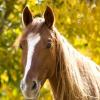 הרדמת בעלי חיים - הקושי שבאובדן
