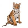 גני-חיות ברחבי הארץ: לאיזה גן חיות לקחת את הילדים?