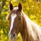 הרדמת בעלי חיים – הקושי שבאובדן