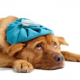 מצבי חירום אצל כלבים וחתולים – הכירו את חיית המחמד שלכם!